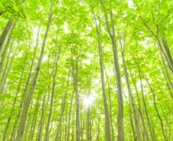 青森県の債務整理
