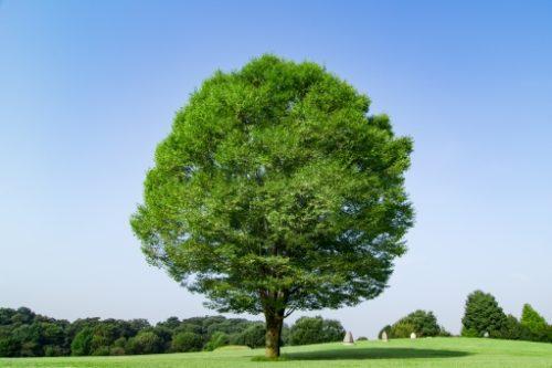 大室公園の木
